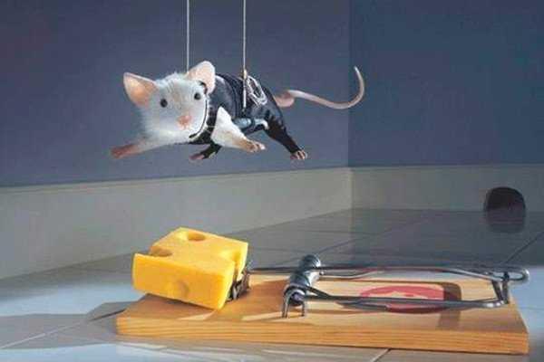 Как избавиться от крыс в погребе
